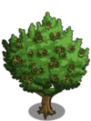 Hazelnut Tree2-icon