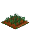 Bamboo-seed-33