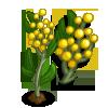 Golden Wattle Single Bloom-icon