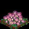 Lotus-super