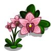Pink Boat Orchid-icon
