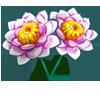 Lotus Jello-icon