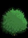 Alma Fig Tree1-icon