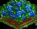 Blue Rose 100