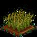 Barley 100