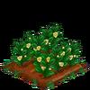 GreenTea-bloom