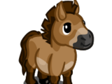 Przewalski Mini Horse