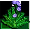 Chicory-icon