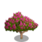 Crape Myrtle Tree-icon