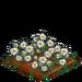 Edelweiss 100
