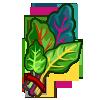 Rainbow Chard-icon
