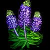 Salvia-icon
