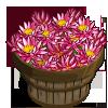 Water Lily Bushel-icon