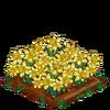 Daffodils-super