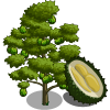 Durian Tree-icon