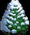 Sitka Spruce7-icon