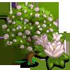 Oyama Magnolia Tree-icon