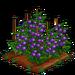 Purple Tomato 100