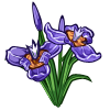 Walking Iris-icon