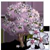 Sargents Cherry Tree-icon