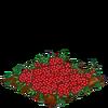 Cranberries-bloom
