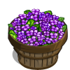 Purple Canola Bushel-icon