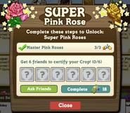 Super Pink Roses Certify