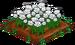 White Rose 100