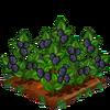 BlackBerries-super