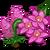 Pyramidal Orchid Full Bloom-icon