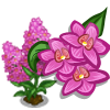 Pyramidal Orchid Full Bloom-icon