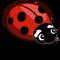 Misty Lady Bug-icon