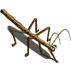 Stick Bug-icon