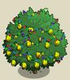 Alma Fig Tree6-icon