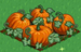Pumpkin extra100