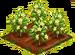 Brush Olive 66