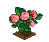 Perfect English Rose-icon