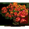 Red Cassia Tree-icon