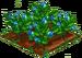 Blue Rose 66