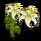 White Lily-icon