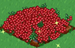 Cranberry extra100