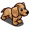 Dachshund Puppy Cream-icon
