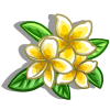 Evergreen Frangipani-icon