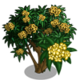 Yellow Plumeria Tree-icon