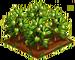 Brush Olive 100