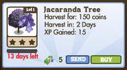 Jacaranda Tree Market Info (January 2012)