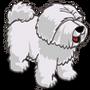 Sheep Dog-icon