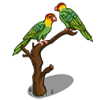 Carolina Parakeet-icon