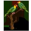 Carolina Parakeet-icon