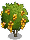 Golden Starfruit Tree2-icon